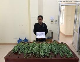 """Bắt quả tang 2 chị em ruột đang """"thu hoạch"""" hơn 2.300 cây thuốc phiện"""