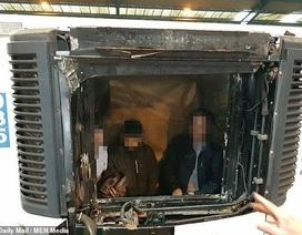 Anh phạt tù đối tượng đưa 10 người Việt xâm nhập trái phép bằng xe đông lạnh