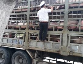 Dịch tả lợn châu Phi: Kiểm soát chặt chẽ các phương tiện vận chuyển lợn qua địa bàn Đà Nẵng