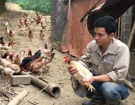 Trở về từ Hàn Quốc, 8X thả bạt ngàn gà trên đồi, bỏ túi 170 triệu đồng