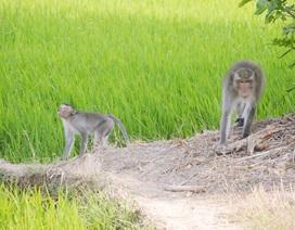 Tiếp tục tìm bắn con khỉ hoang cắn 2 bé trai