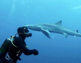 """Cảnh cực hiếm: Cá mập… """"hôn"""" thợ lặn"""