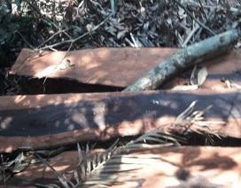 Vụ phá rừng gỗ quý ở VQG Phong Nha - Kẻ Bàng: Chuyển giao công an khởi tố vụ án