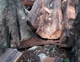 Lập đoàn liên ngành điều tra vụ phá rừng tại Phong Nha - Kẻ Bàng
