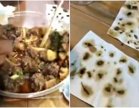 Bất ngờ tìm thấy hơn 40 con gián chết trong món vịt mua ở cửa hàng
