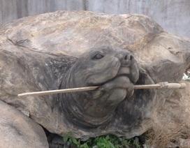 """Cận cảnh rùa đá """"Hồn thiêng đất Việt"""" nặng 20 tấn, 600 triệu đồng không bán"""