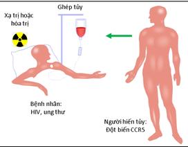 Thụ thể CCR5 và sự lây nhiễm HIV