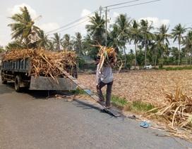 Thảm cảnh người trồng mía: Đầu tư 7 triệu, bán được… 3 triệu