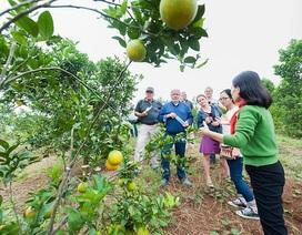 Doanh nghiệp cam tiên phong kết nối với các hộ nông dân tại Nghệ An