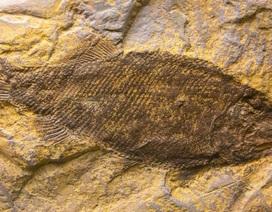 Vì sao một số loài sống sót sau sự kiện tuyệt chủng hàng loạt?