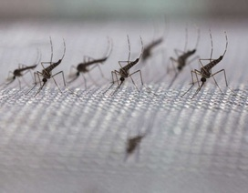 Phát hiện thuốc có khả năng làm giảm sự lây lan của bệnh sốt rét