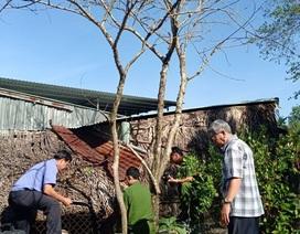 Vụ chặt cây trên đất mua, suýt ngồi tù: Coi thường pháp luật hay cậy quyền cậy thế?
