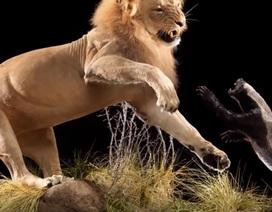 Điểm danh những loài động vật khiến giới khoa học không ngừng thắc mắc (Phần 1)