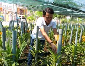 Bỏ công việc lương cao, về trồng lan Mokara thu tiền tỷ mỗi năm