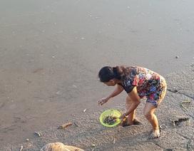 Người dân thành phố đổ xô ra sông vớt cá chết