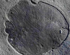 Động vật được biết đến sớm nhất trên Trái Đất có thể đã rất phát triển