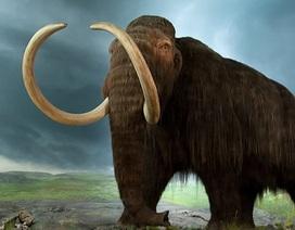 Đột phá trong nhân bản voi ma mút