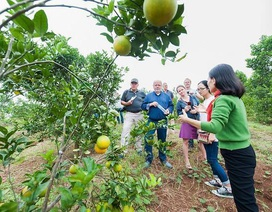 Doanh nghiệp xã hội tại Việt Nam: Có mặt ở cả 3 miền, ngày càng trẻ và giàu tham vọng