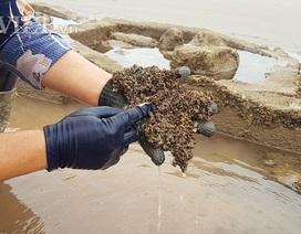 """Nam Định: Săn """"lộc biển"""" bé tin hin, bám ở đá, kiếm nửa triệu/ngày"""