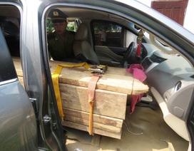 Bắt xe bán tải lắp biển giả, vận chuyển gỗ lậu