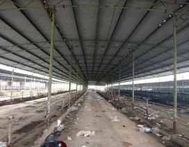 """""""Đột nhập"""" dự án 4.500 tỷ, nơi con trai cựu Chủ tịch BIDV Trần Bắc Hà bán bò lấy tiền tư túi"""