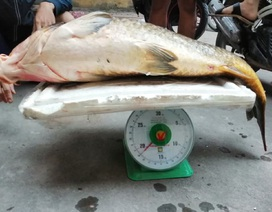 Người Hà thành mạnh tay chi gần chục triệu để mua 1 con cá chép