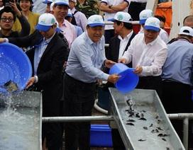 Việt Nam - Trung Quốc cùng thả hơn 5 triệu con giống thủy sản xuống biển