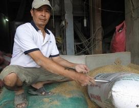 Vẫn chưa tìm ra chủ nhân của 3 cây vàng bỏ quên trong bao lúa