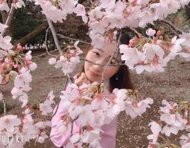 Ngắm hoa anh đào nở - Ngẫm về sự thanh cao, khiêm nhường của người Nhật
