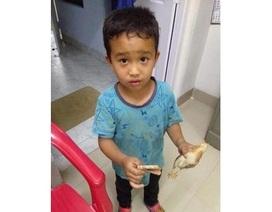Đạp xe cán nhầm gà con, em bé mang tiền và gà đến bệnh viện nhờ cứu chữa