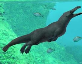 Phát hiện hoá thạch cá voi cổ đại có… bốn chân và đuôi như rái cá