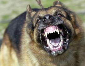 Bé trai 11 tuổi tử vong do chó cắn
