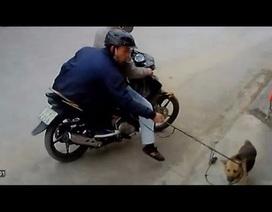 """Hà Nội: Nhóm trộm chó hiếp dâm 2 thiếu nữ """"chia nhau"""" 79 năm tù"""