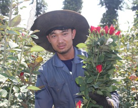 Thanh niên 9X trồng hoa hồng xứ Bắc trên phố núi, thu hàng trăm triệu đồng mỗi năm
