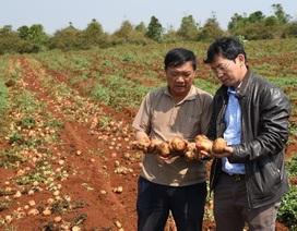 Lợi ích đa phương từ dự án Nông nghiệp bền vững của PepsiCo