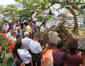 """Choáng ngợp những vườn cây triệu đô """"độc nhất, vô nhị"""" của đại gia Việt"""