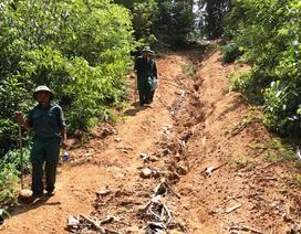 Gian nan hành trình bảo vệ rừng trên dòng Sê San