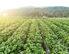 Đầu tư nghỉ dưỡng sinh thái kết hợp nông nghiệp – đà phát triển mới cho nghỉ dưỡng ven đô