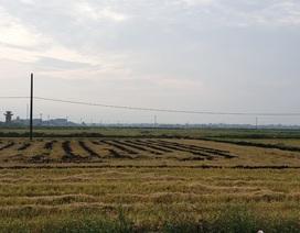 Bị đốt gần 1.000 cuộn rơm vì không đồng ý đóng tiền bảo kê cánh đồng