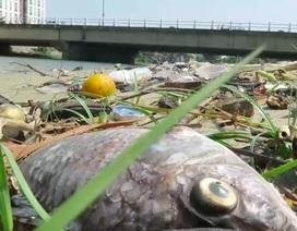 Xác định nguyên nhân cá chết trắng sông Phú Lộc