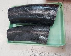 Giấu ngà voi trong thùng tôm hùm và cá khô
