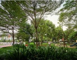 Giải mã nhu cầu tìm không gian xanh tại nội đô Hà Nội