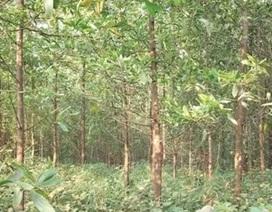 Trồng rừng bán tín chỉ cacbon ở Bắc Trung Bộ, cơ hội thu về hàng triệu USD