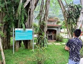 """Cận cảnh cây ổi biết """"cười"""", cây đa 300 năm di chuyển một lần """"độc nhất"""" Việt Nam"""