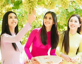 """Dàn Hoa hậu Việt Nam 2018 """"đọ sắc"""" cùng... nho"""