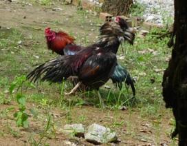 Tạm giữ 9 đối tượng trong vụ bắn người tại trường gà