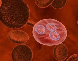 """Xem kí sinh trùng sốt rét dùng """"chiêu trò"""" để vô hiệu hóa hệ miễn dịch"""