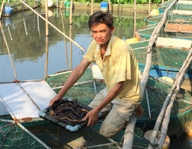 Nước sông đen ngòm, cá chết hàng loạt, dân khốn khổ vì mất nước sinh hoạt
