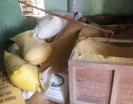 Vụ mất gần 50 cây vàng giấu trong đống lúa: Hơn 2 tháng chưa tìm ra thủ phạm
