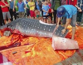 Thực hư thông tin cá voi quý hiếm bị xẻ thịt bán